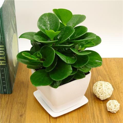 这6种花卉盆栽好养易活,新手懒人的福音!