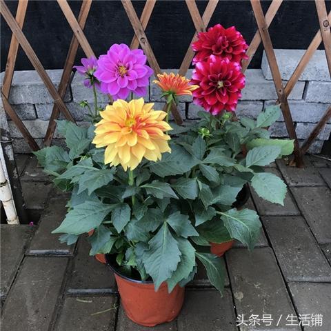 冬天这15种花卉这么养,枝繁叶茂开花多!