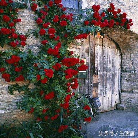 3种花随便在家里养一颗,轻松拥有一个小花园!