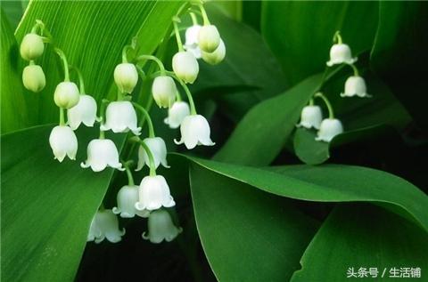 这10种耐寒植物适合庭院种植,露地也能安全过冬!