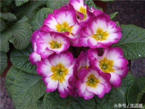 这4种可全年开花的花卉,够你赏一年!