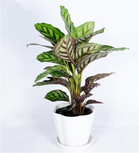 超耐阴的8种室内植物,没阳光都能养活!