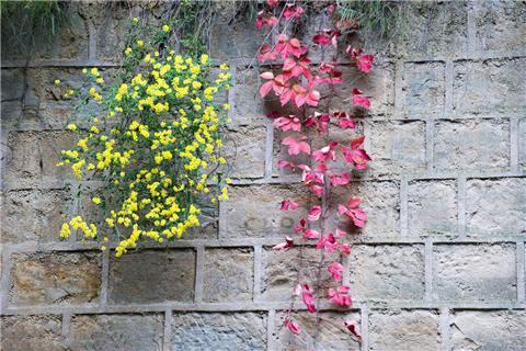 阳台变花海盆里放这个,叶子油绿,花儿常开!