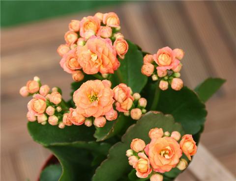 这4种花剪个枝放水里,最快的3天就生根!