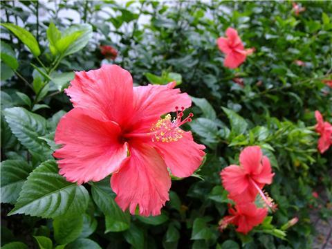 推荐6种盆栽花卉,好看又好养!