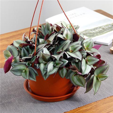 这4种耐阴好养的植物,没光照也能养!
