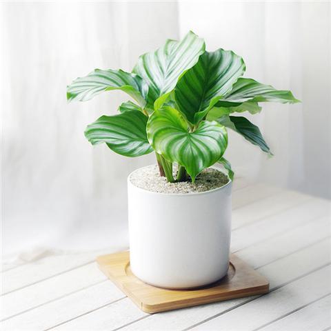 12种室内耐阴植物,没阳光也能活!