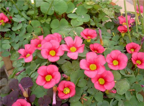 这8种花四季开花不断,漂亮又好养!
