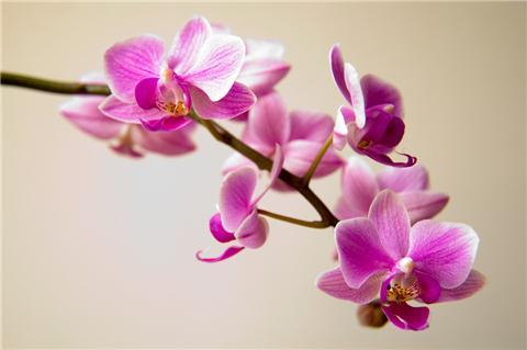 推荐14种超耐阴植物,没光照也能长满屋!