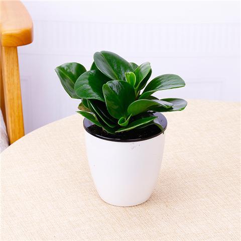 8种易养活的观叶植物,轻松养爆盆!