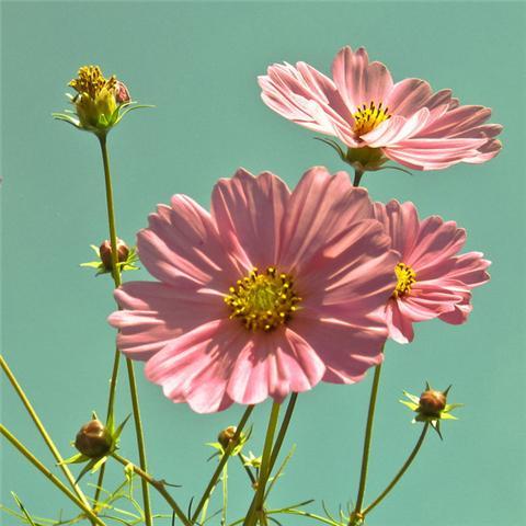 这7种耐旱花卉,花期超长,好看又好养!