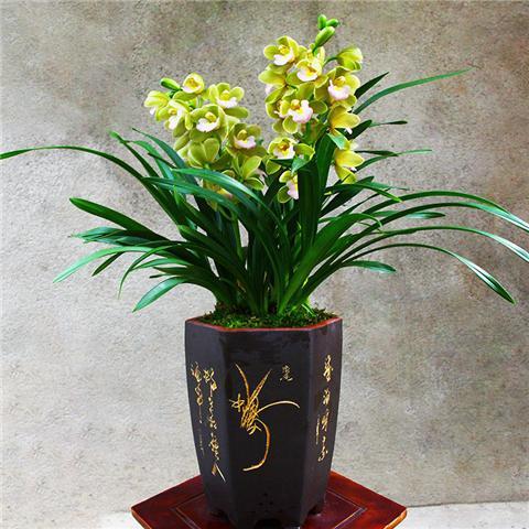 这6种开花机器,四季开花,好养又漂亮!