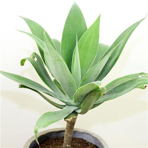 这4种花好养耐旱,1个月不浇水都能活!