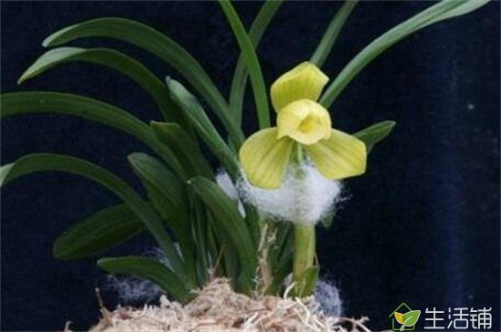 什么兰花品种价格最贵?10种昂贵的兰花品种,高贵1400万