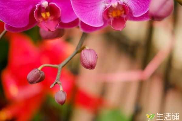 蝴蝶兰多少个叶开花?长到4至5片叶子就会开花