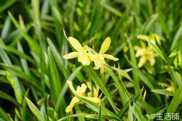 兰花喜欢干还是喜欢湿,在湿润的环境中生长得更好