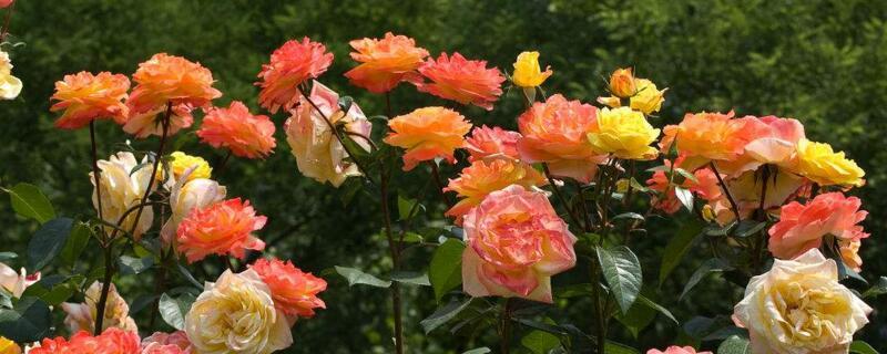 6月开花的有哪些?炎热夏季,也有花儿美丽绽放