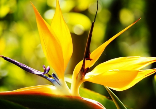 """""""最美""""的花,发现身边的美"""