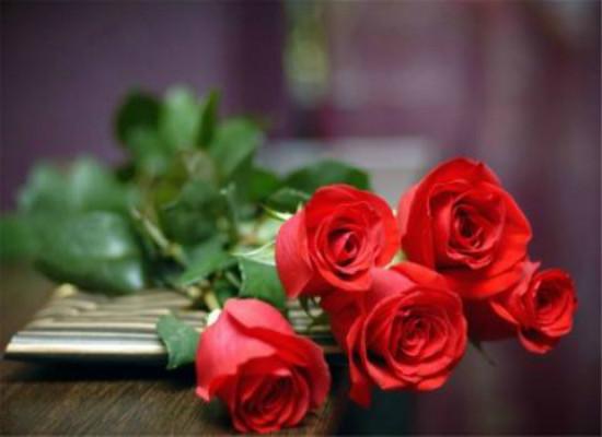 刚买的盆栽玫瑰一直没精神,该怎么养?