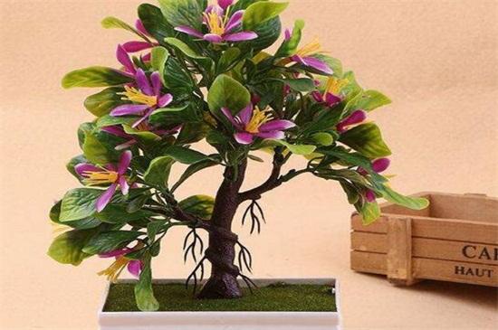 盆栽山茶花掉叶子怎么办,要及时对症下药