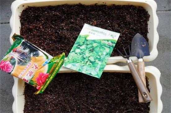 六月雪用什么土养护,对土壤的要求比较严格