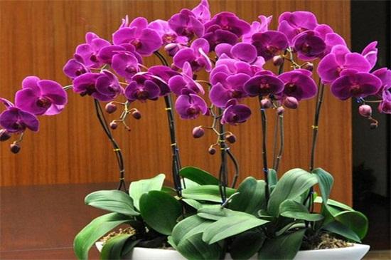 最简单蝴蝶兰家庭养法,选择透气美观的瓦盆或者陶瓷盆
