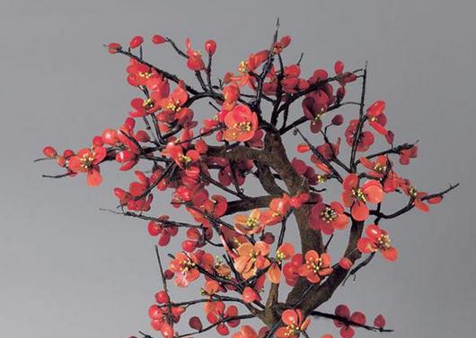 梅花如何修剪 所有的枯花以及干枝都剪掉