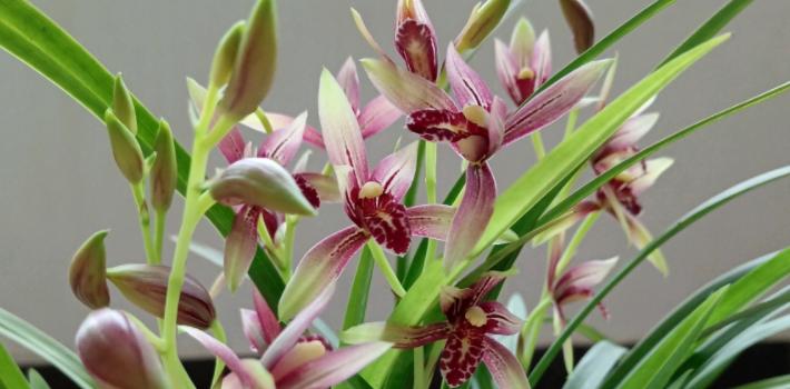 最贵兰花品种图片及价格