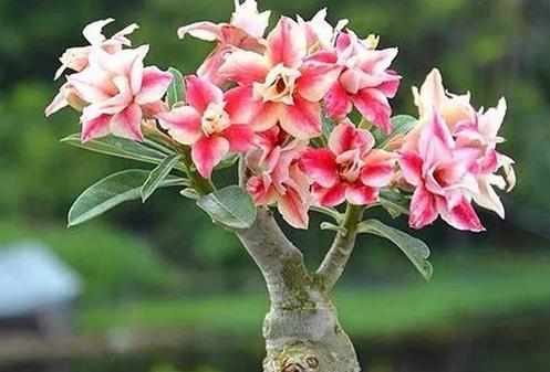 8月养9种花,随便养养就开花,开得最好